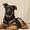 Питомник DOG PATROL. Щенки немецкой овчарки #1700517