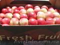Предлагаем яблоки с Польши!
