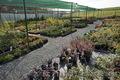 Оптовая и розничная продажа хвойных и лиственных декоративных растений.