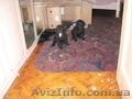 Плановые щенки чёрного терьера в Харькове