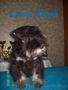 Цвергшнауцер,  щенки чёрные с серебром,  питомник  ALTEGOS