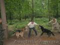 дресирування собак