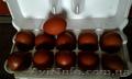 Инкубационное яйцо кур породы-Маран.