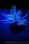 Профессиональное светодиодное оформление - Изображение #4, Объявление #1577920
